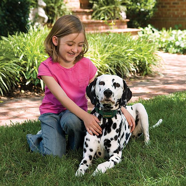 Petsafe Small Dog Bark Collar Comfort Fit