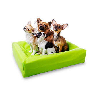 Hundbäddar - Madrasser
