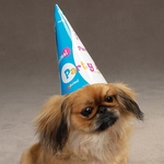 Pet Studio Party Hatt 6-Pack
